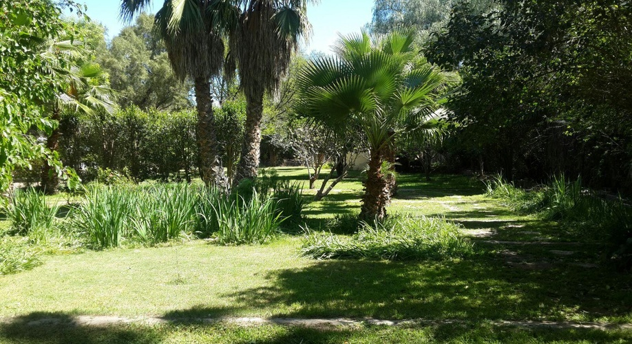 Garden with Palms